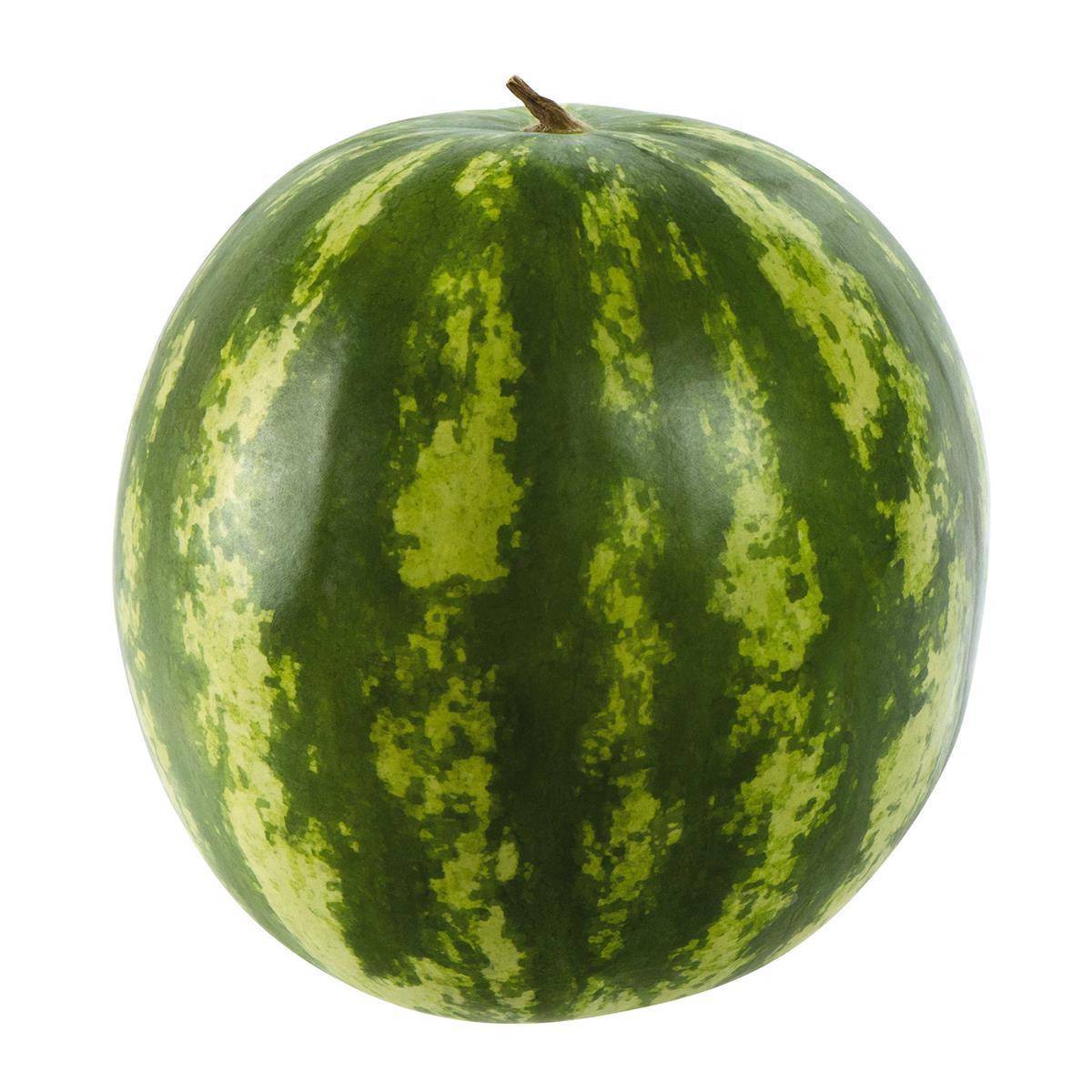 wassermelone pflanze kaufen